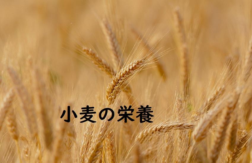 小麦の栄養タイトル